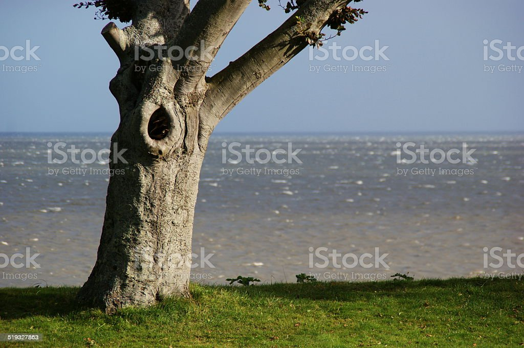 Tree by the sea stock photo