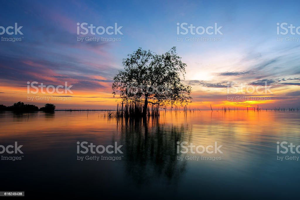 Tree by the sea with the beautiful morning sun. stock photo
