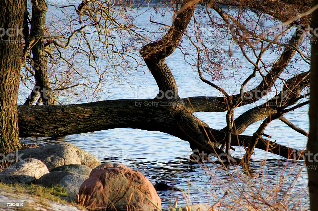 Tree by the water in summer royalty-free stock photo