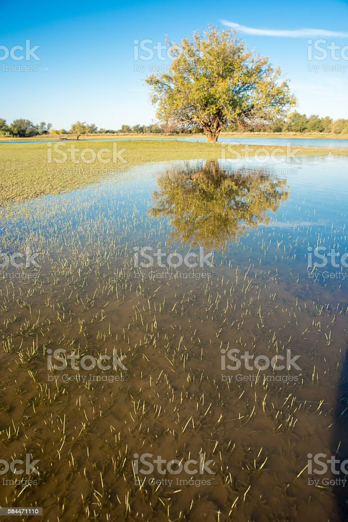 Tree by watery landscape stock photo