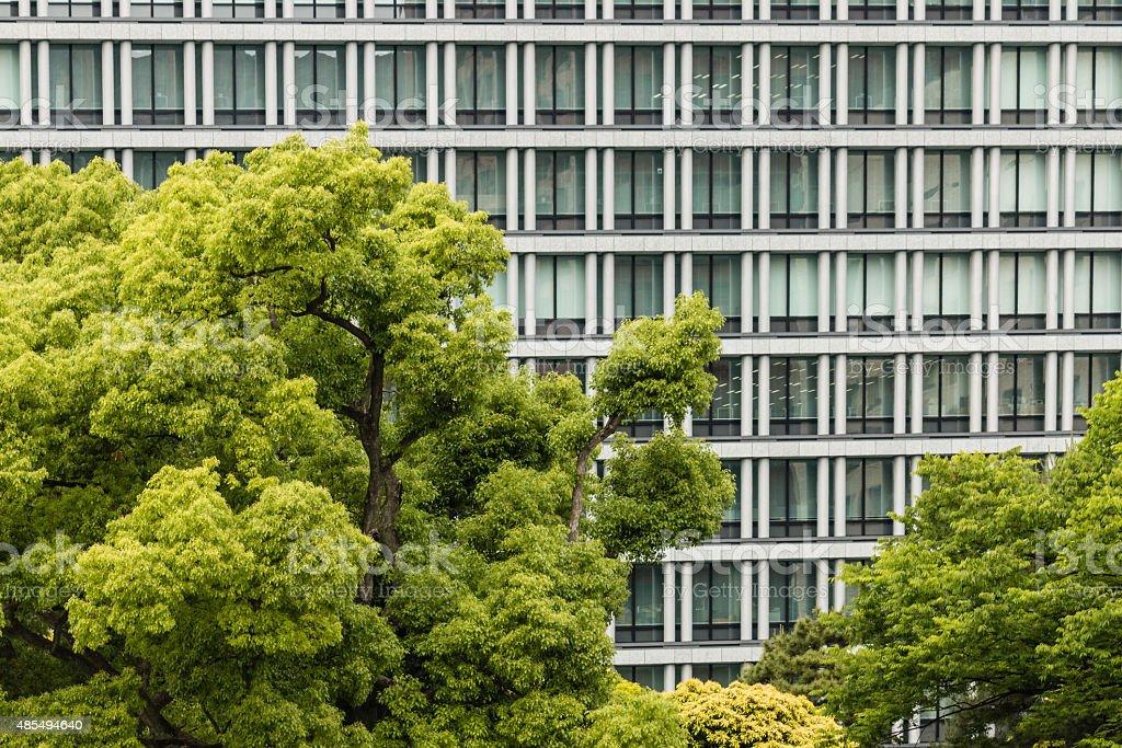 tree canopy against office windows stock photo