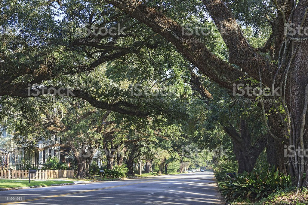 Tree canopy over boulevard in Mobile, Alabama stock photo