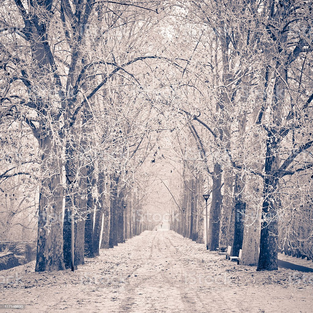 Tree Canopy Winter Country Road Nobody royalty-free stock photo