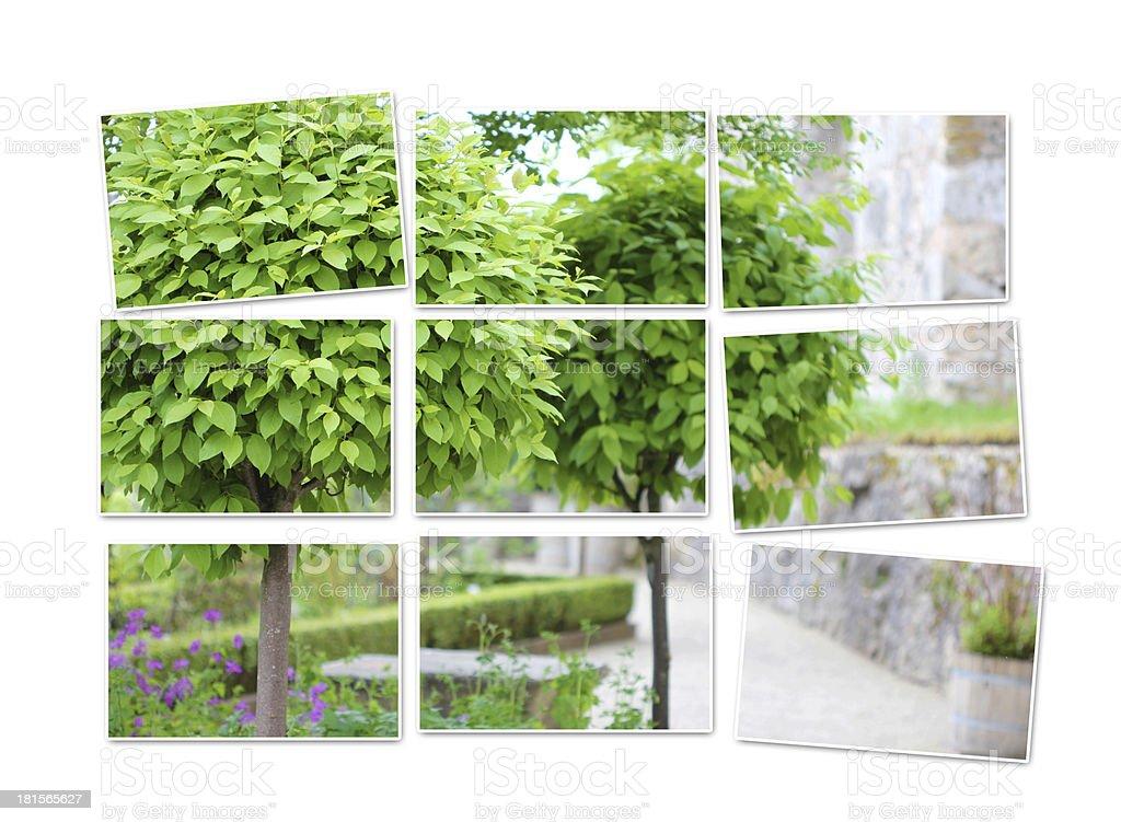 Tree catalpa mosaic royalty-free stock photo