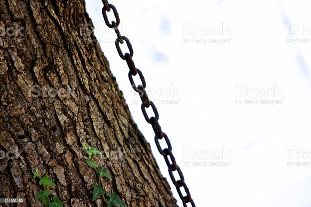 Tree Chain stock photo