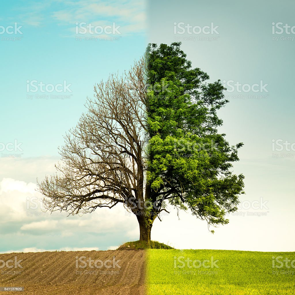 Tree change from spring to summer. stock photo