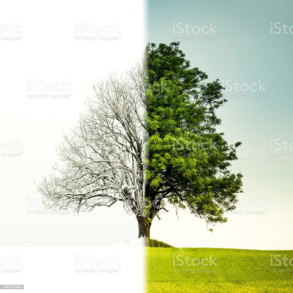 Tree change from winter to summer stock photo
