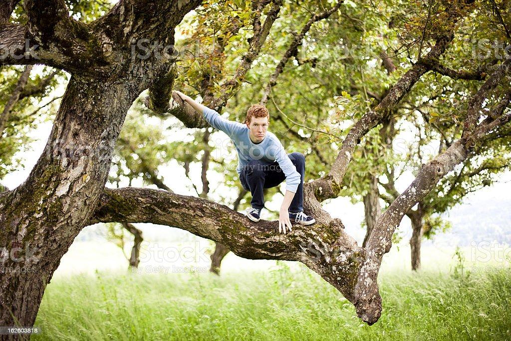 Tree climbing young man stock photo