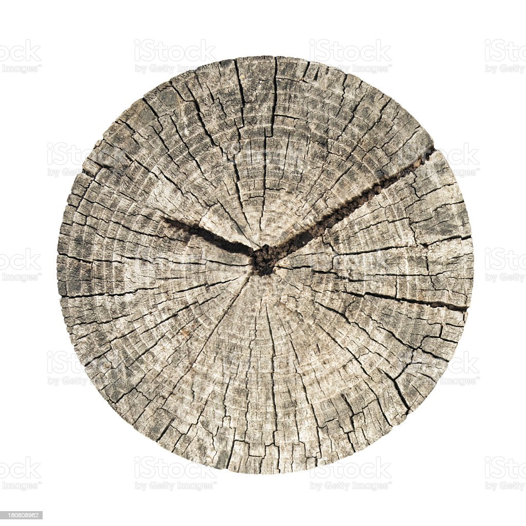tree clock royalty-free stock photo