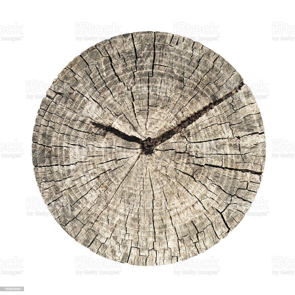tree clock stock photo