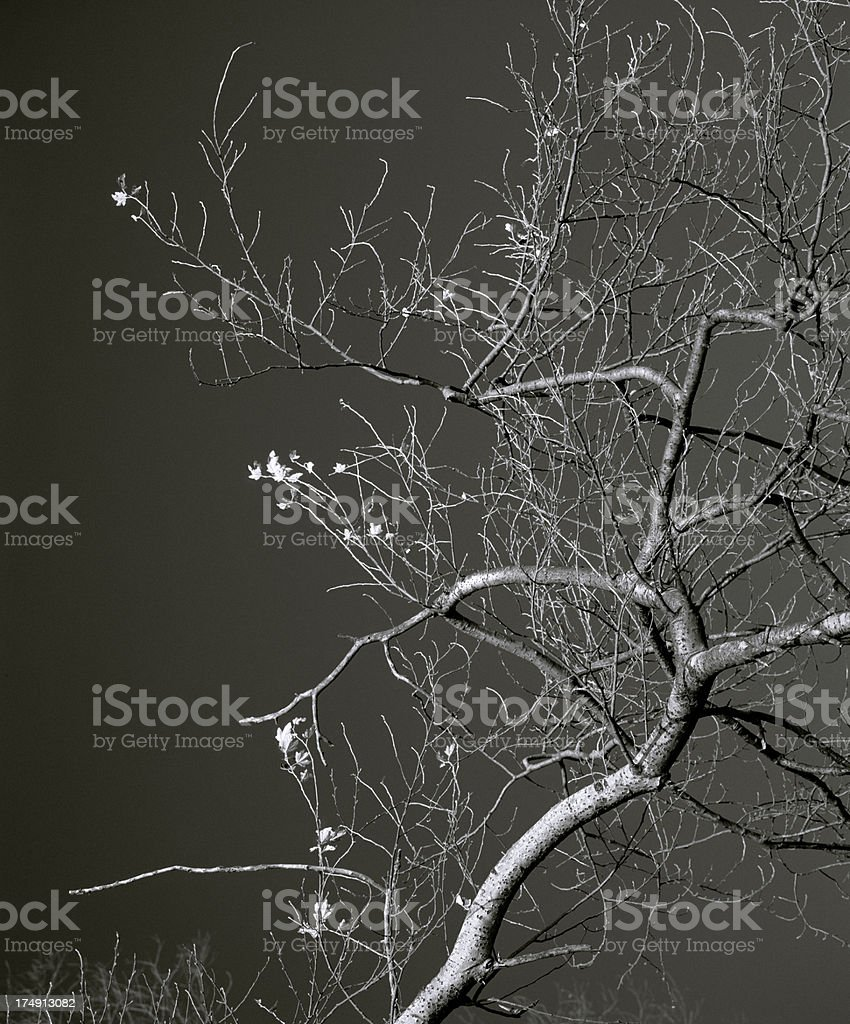 Tree composition, The Netherlands. stock photo