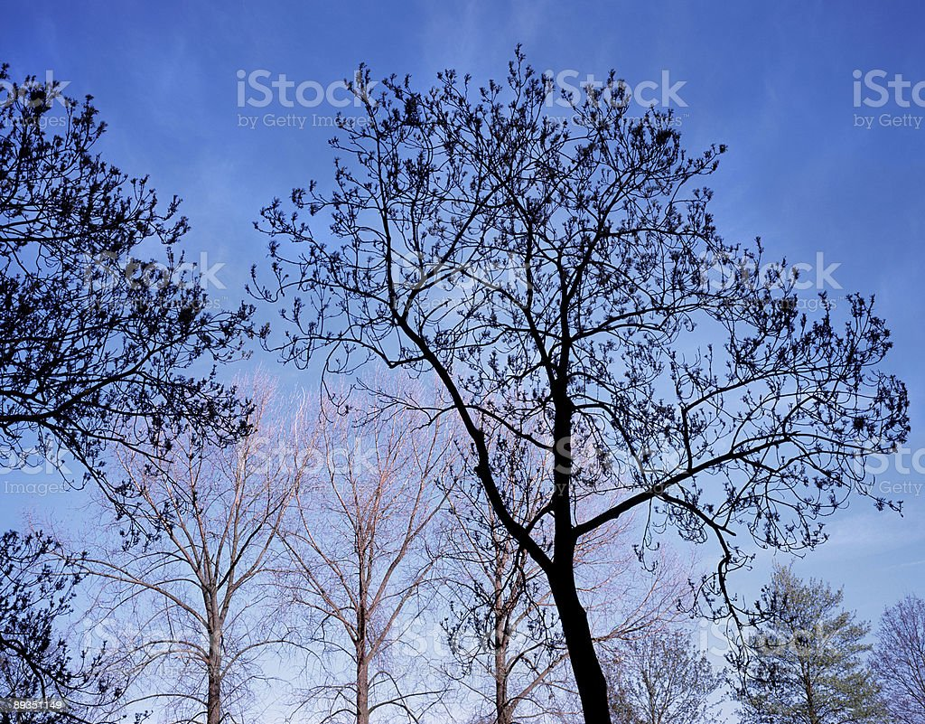Tree composition, The Netherlands. royalty-free stock photo