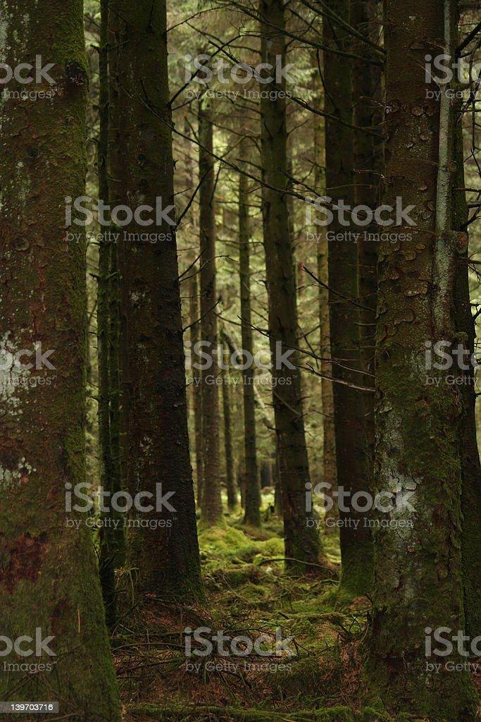 Tree Corridoor royalty-free stock photo