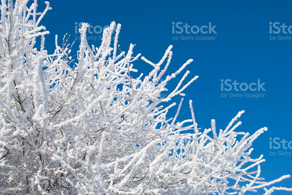 Tree covered in snow and frost royalty-free stock photo