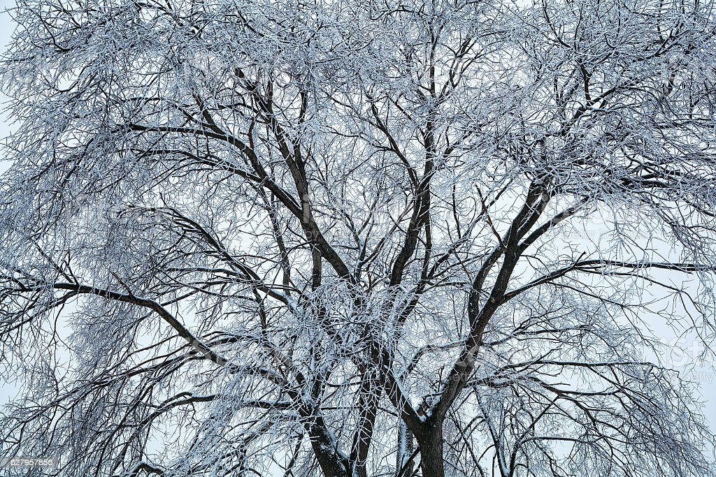 Tree, covered with ice and frost. Winter natural background stock photo