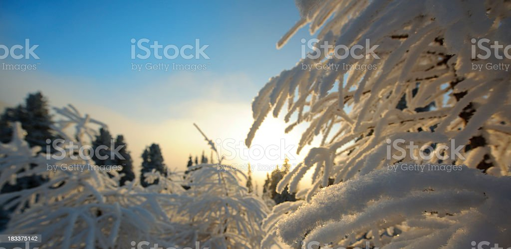 tree covered with snow royalty-free stock photo