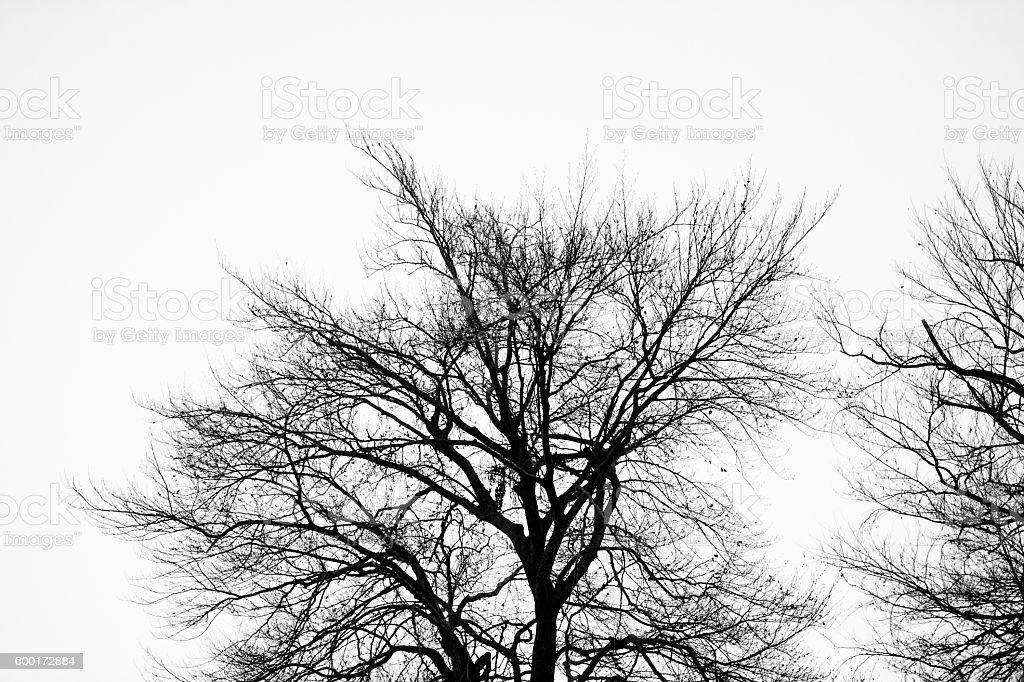 Tree crown stock photo