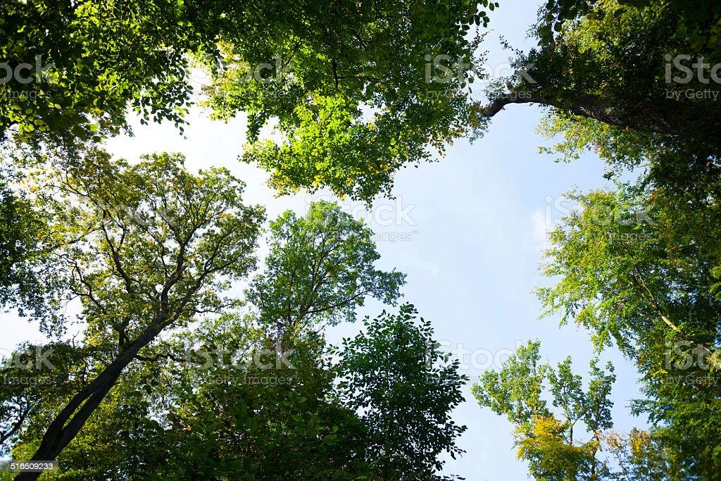 Tree crowns stock photo