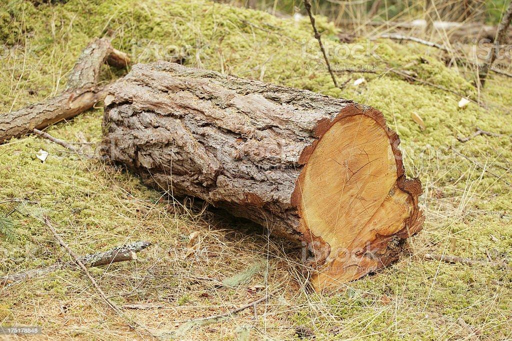 Tree Cut royalty-free stock photo