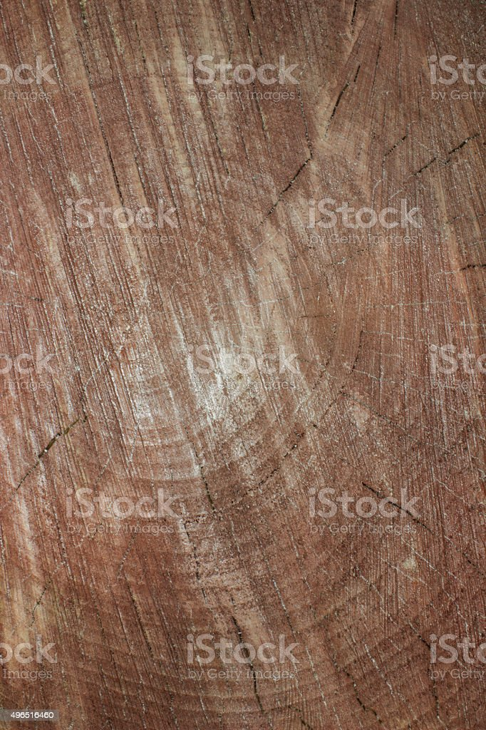 Tree cut stock photo