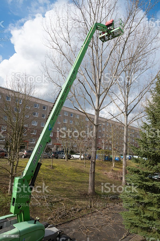tree cut worker- Pruning and thinning out in the city stock photo