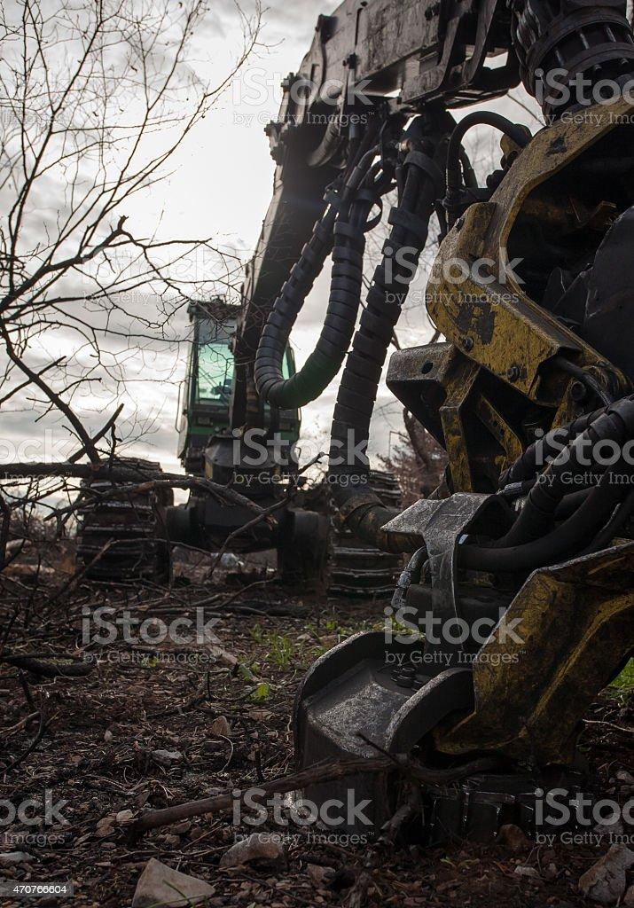tree cutter stock photo