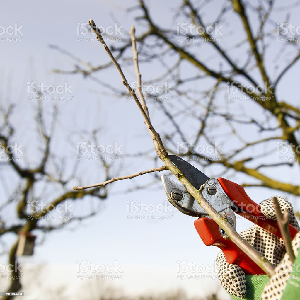 tree cutting stock photo