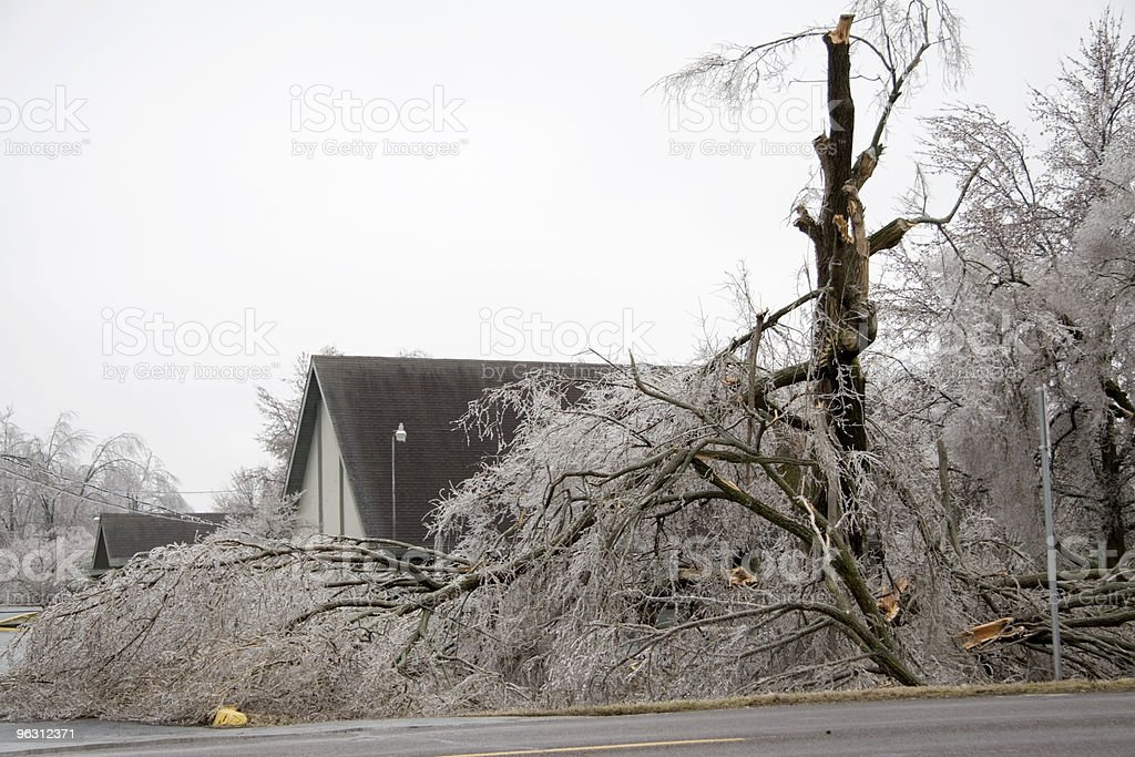 Tree Damage from the Ice Storm royalty-free stock photo