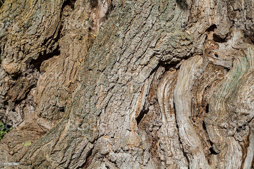 tree detail stock photo