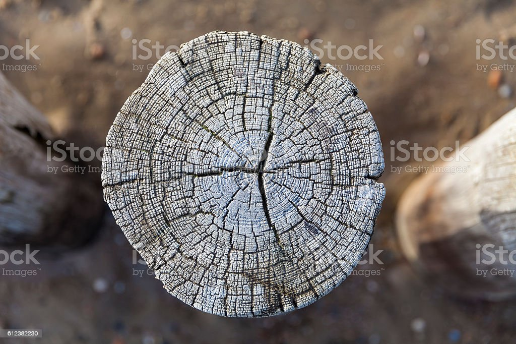 Tree disc at the North Sea stock photo