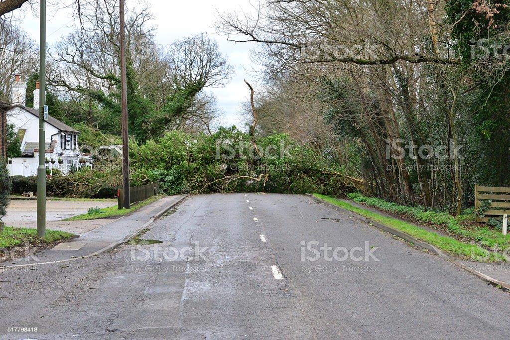 Tree down on the Balcombe road stock photo