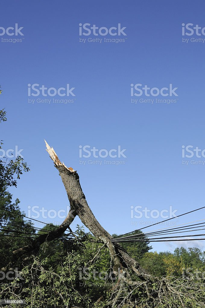 tree down royalty-free stock photo