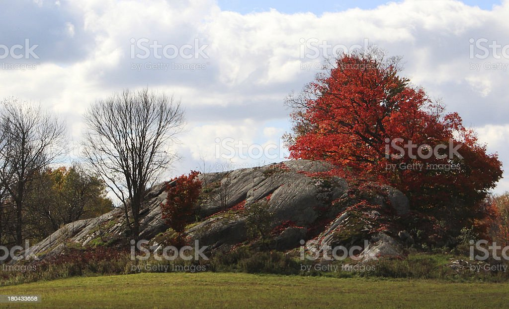 Tree Dropping Leaves Onto Giant Rock royalty-free stock photo