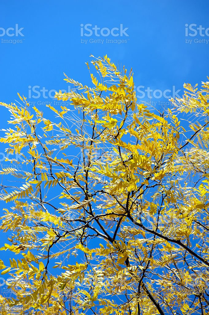 Tree during fall royalty-free stock photo