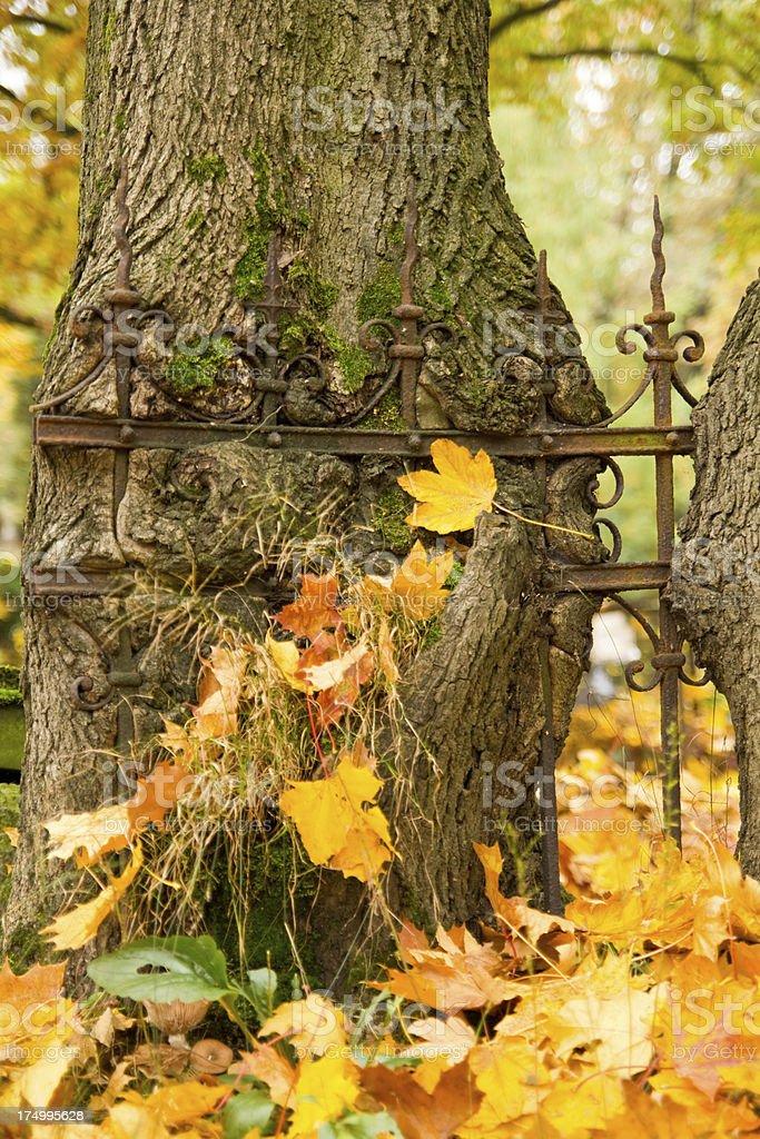 Tree Eats Fence royalty-free stock photo