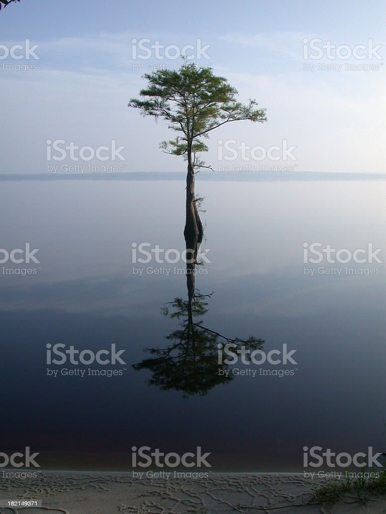 A tree emerges from a still lake and is perfectly reflected royalty-free stock photo