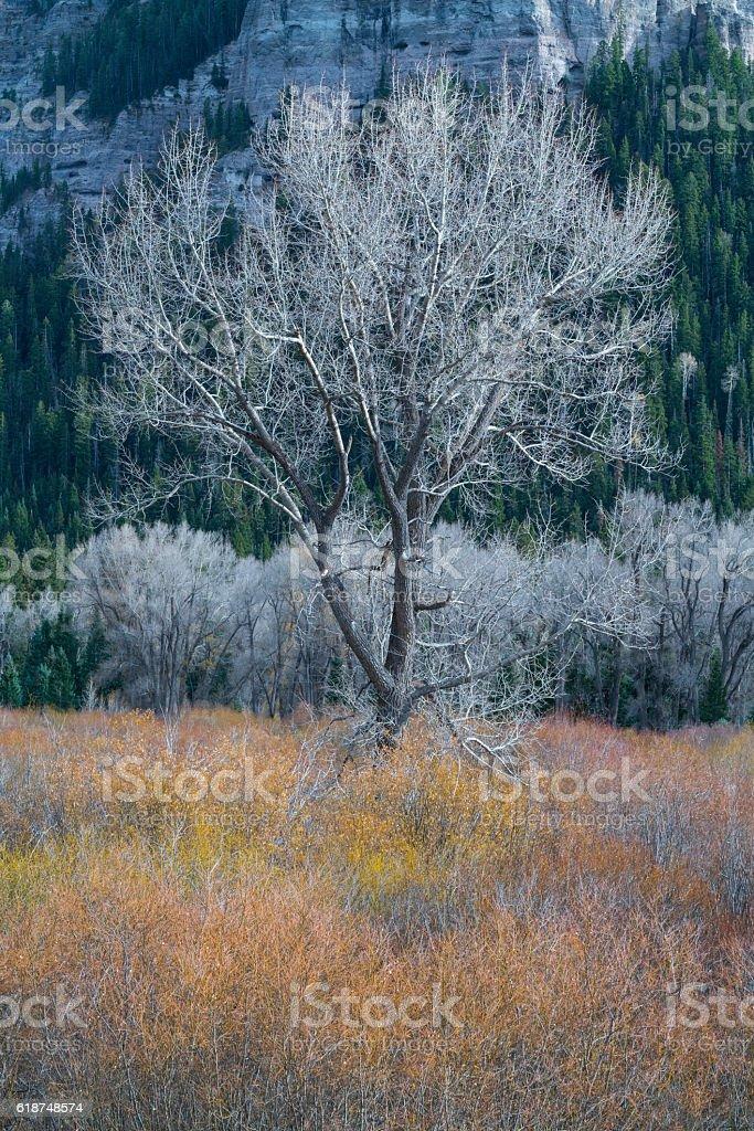 Tree Fall Color Colorado stock photo