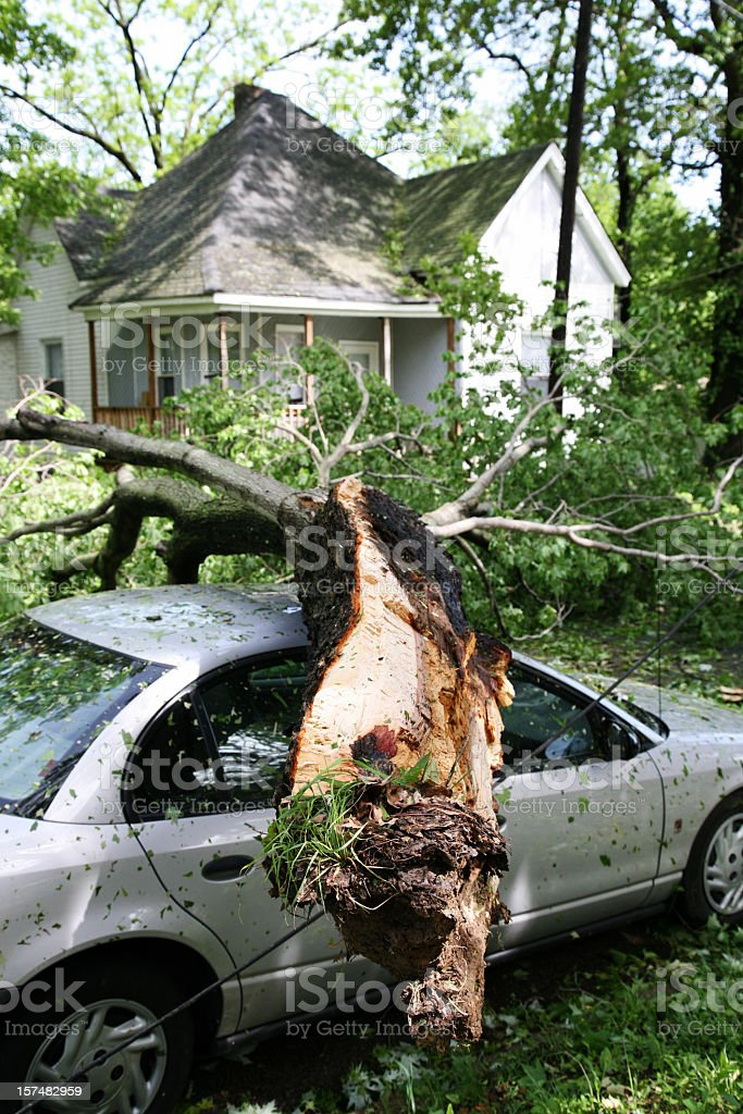 A tree fallen on the roof of a car in front of a house stock photo