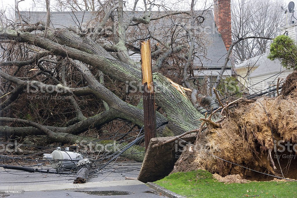 Tree falls on power lines stock photo