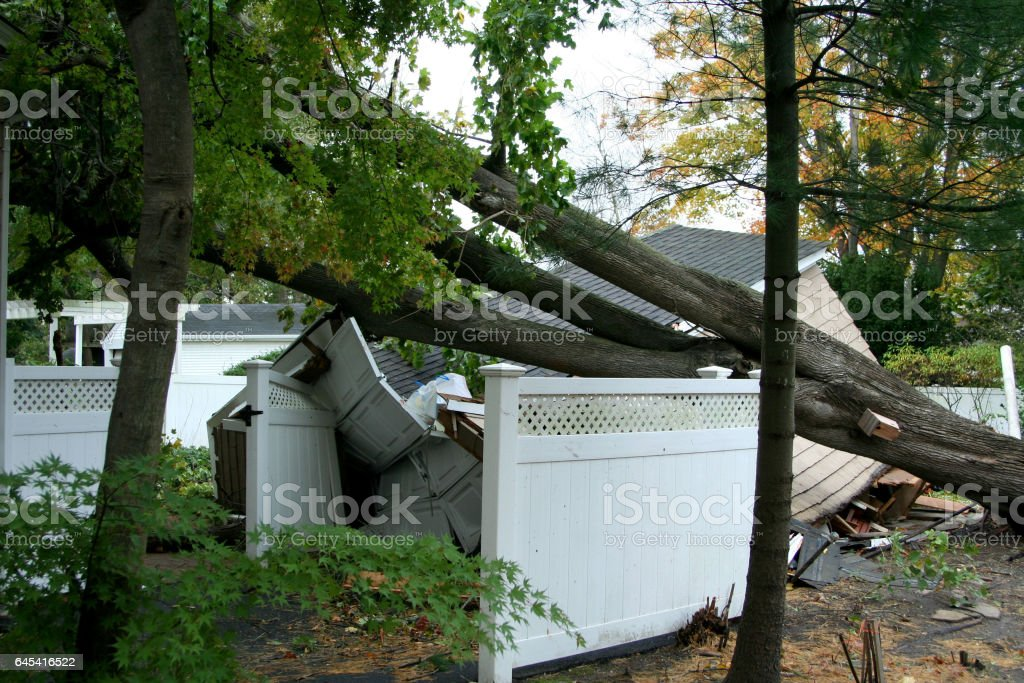 Tree falls on property during hurricane Sandy stock photo