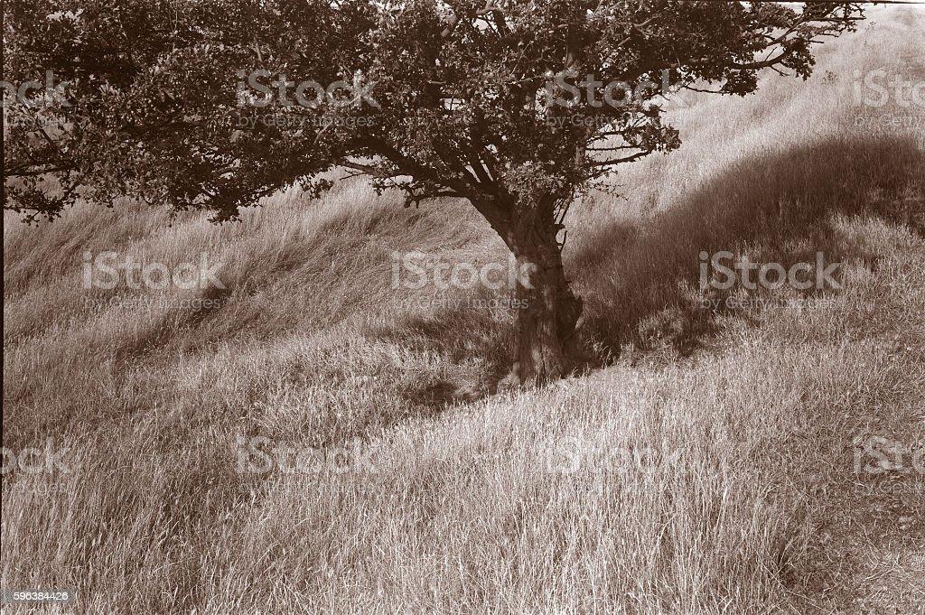 Tree, Faversham stock photo