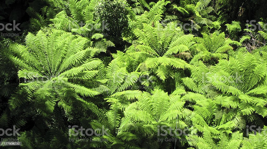tree fern seen from above royalty-free stock photo