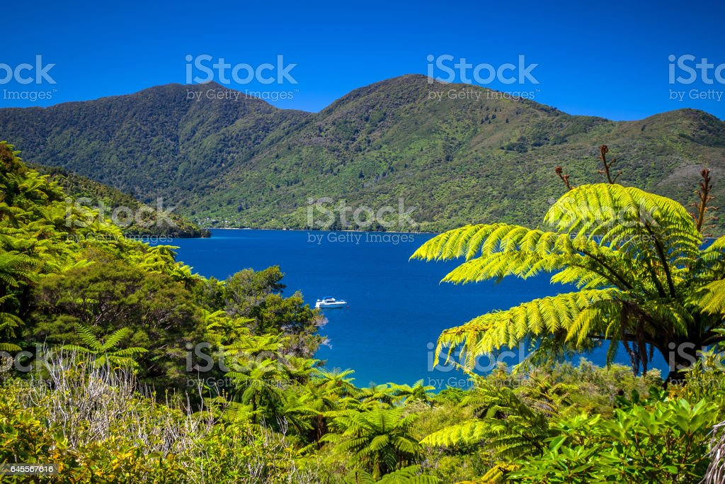 Tree ferns and turquoise blue water in Marlborough sounds stock photo