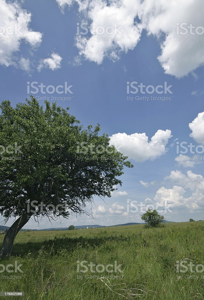 tree field royalty-free stock photo