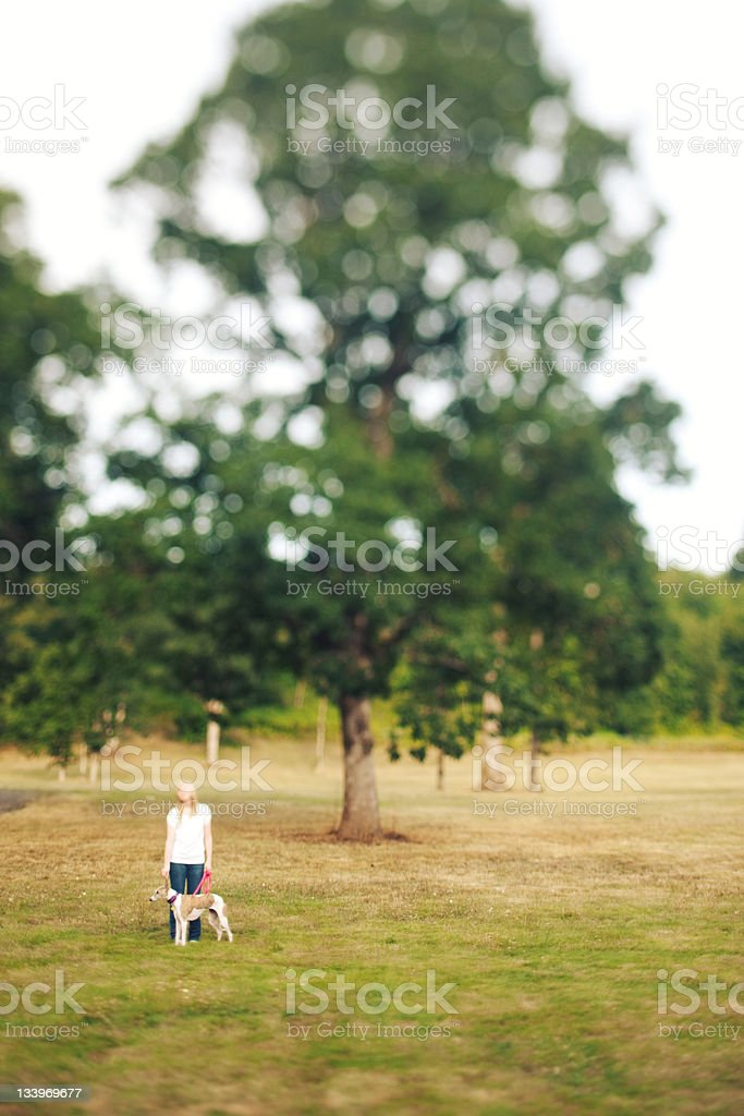 Tree Field Tilt Shifted Dog Woman royalty-free stock photo