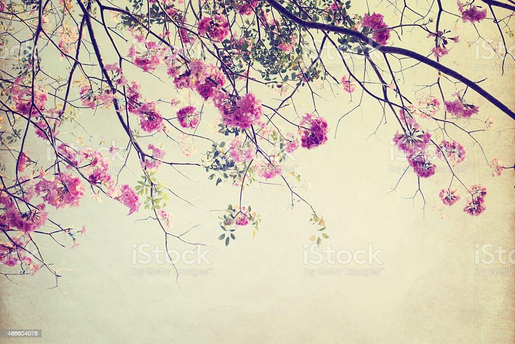 tree flower stock photo