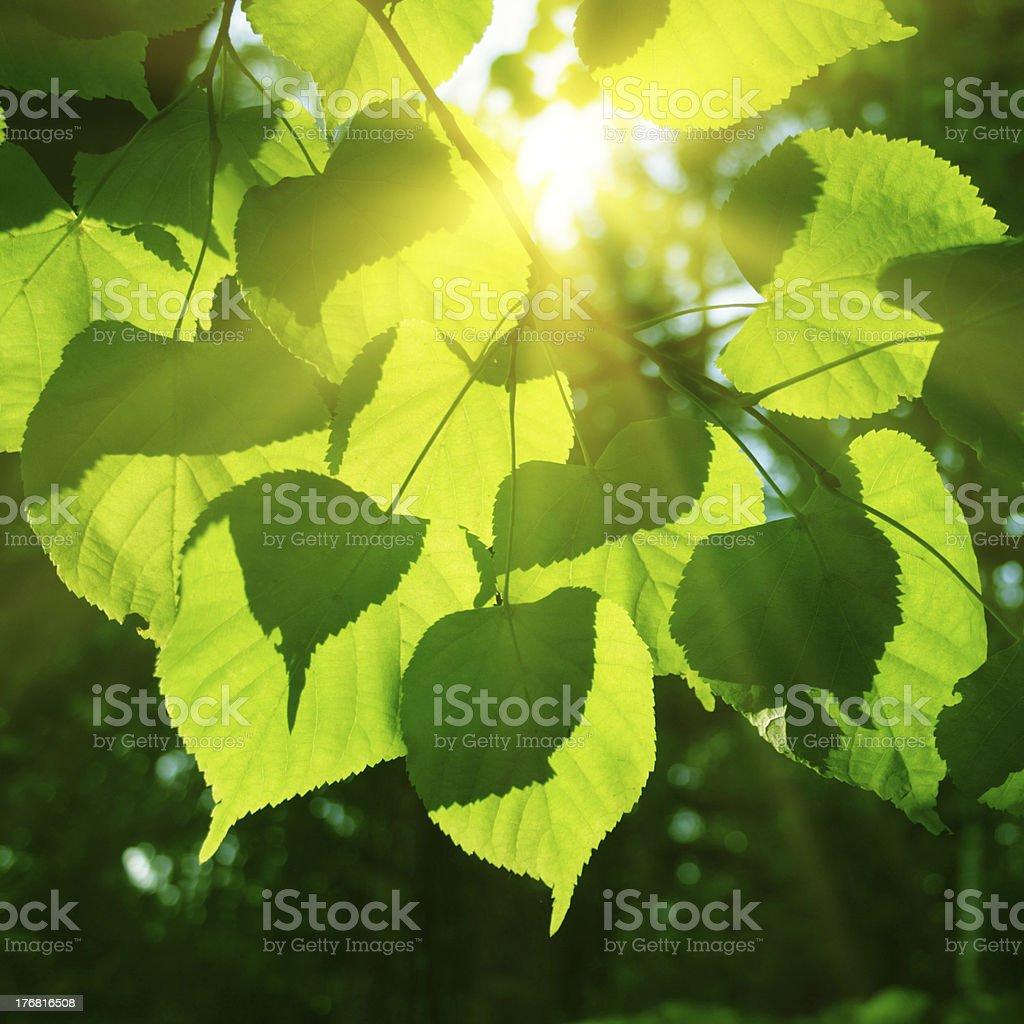 Tree foliage and sun. stock photo