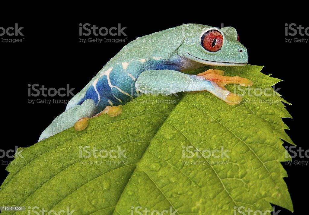 Tree frog climbing on leaf stock photo