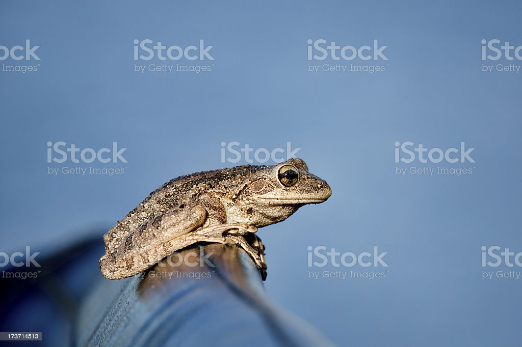 Tree frog on an airboat's seat stock photo