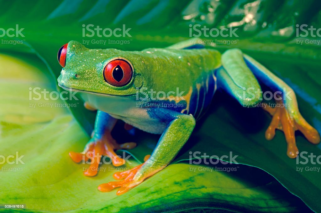 Tree Frog on Colored Leaves stock photo